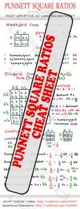 Punnet Square Ratios MCAT Study Guide Cheat Sheet