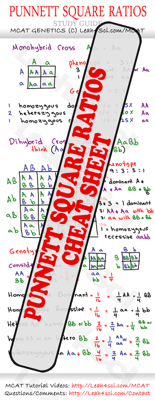 Punnet Square Ratios MCAT Study Guide Cheat Sheet