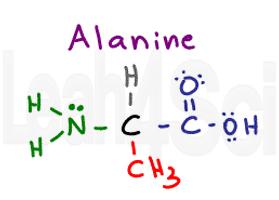 alanine structure