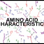 amino acid side chain characteristics by leah fisch
