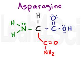 asparagine structure