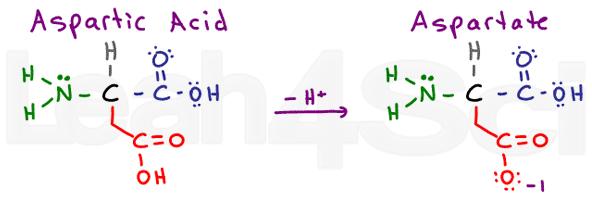 aspartic acid aspartate amino acid structure