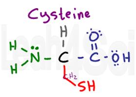 cysteine structure