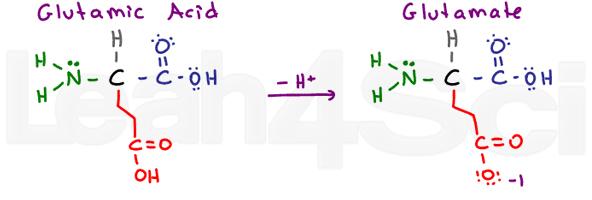 glutamic acid glutamate amino acid structure
