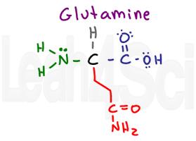 glutamine structure