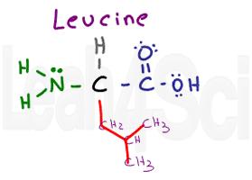 leucine structure