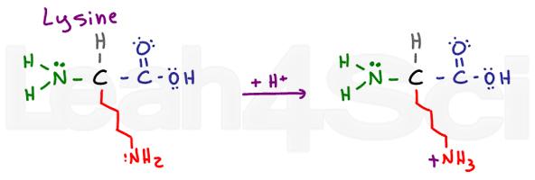 lysine structure
