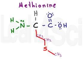 methionine structure