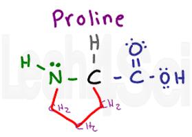 proline structure