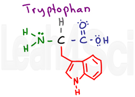 tryptophan structure