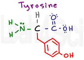 tyrosine structure