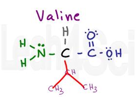 valine structure