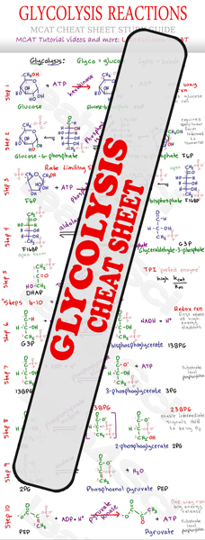 Glycolysis Reaction Steps MCAT Cheat Sheet Study Guide Preview