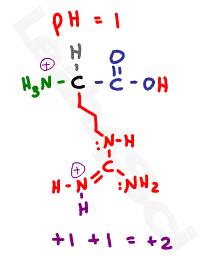 arginine protonated +2 form