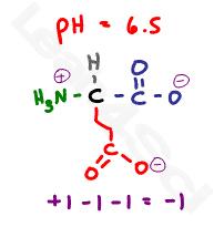 glutamate deprotonated negative form