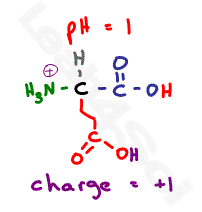 glutamic acid protonated at low ph