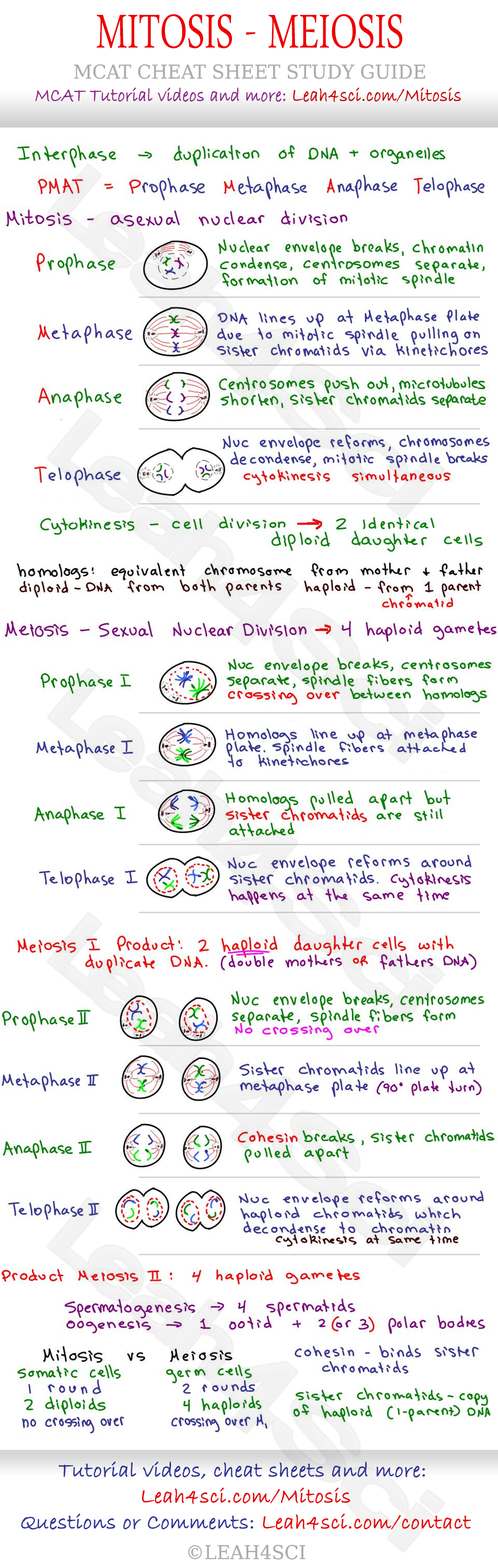 Mitosis and Meiosis MCAT Cheat Sheet Study Guide -