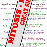Mitosis and Meiosis MCAT study guide cheat sheet preview