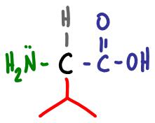 Amino Acid Practice Quiz d