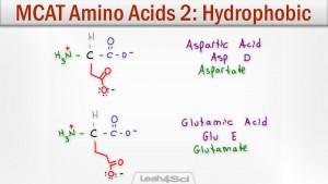Hydrophobic Amino Acids Polar Neutral Side Chains Tutorial Video
