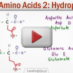 Hydrophobic Amino Acids Polar Neutral Side Chains Tutorial Video Leah Fisch
