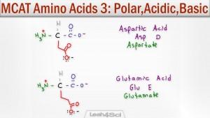 Polar Acidic and Basic Amino Acids tutorial video