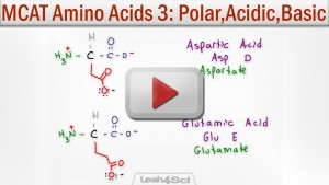Polar Acidic and Basic Amino Acids tutorial video by Leah Fisch