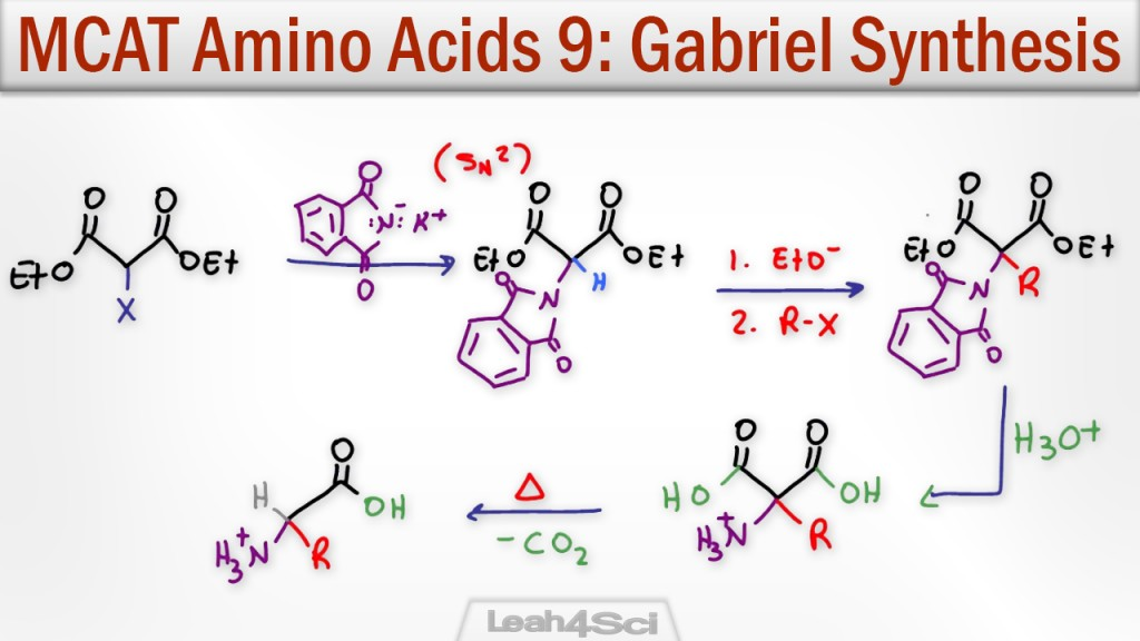 synthesise amino acids Amino acids are classically considered as the building blocks for the synthesis of proteins.