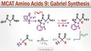 Gabriel Malonic Ester Synthesis Alpha Amino Acids Leah Fisch
