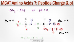 Peptide charge and isoelectric point pi calculation leah4sci