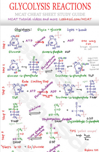 Glycolysis Cheat Sheet in Active Writing MCAT tutorial